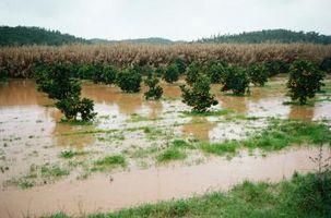 Effetti positivi della Inondazioni