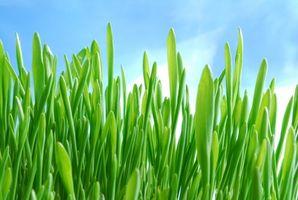 Orzo Verde Dieta