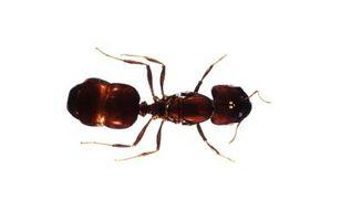 Bugs che causano piaghe sulla pelle