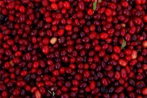 Come utilizzare Cranberry per prevenire i tumori