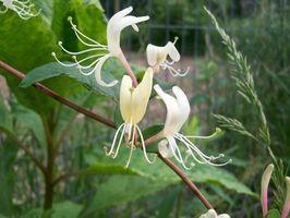 Elenco dei fiori di Bach di erbe e loro utilizzo
