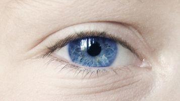 Sviluppo embrionale dell'occhio umano
