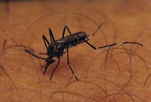 Ho davvero bisogno di indossare abiti di colore chiaro in Mosquito Aree?