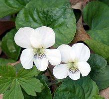 Dove trovare fiori organici commestibili