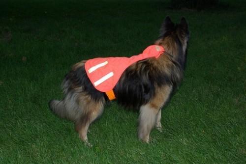 Caduta la sicurezza per il vostro cane nel bosco - gilet vendita