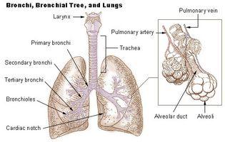 Sleep Apnea & Malattia polmonare interstiziale