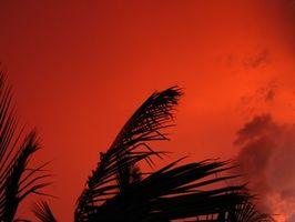 Quali sono i benefici per la salute di olio di palma rosso naturale?