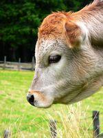 Colostro bovino e la crescita dei capelli