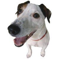 Come ottenere oggetti estranei dalla gola di un cane