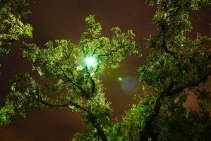 Studio degli effetti del colore verde sulla salute