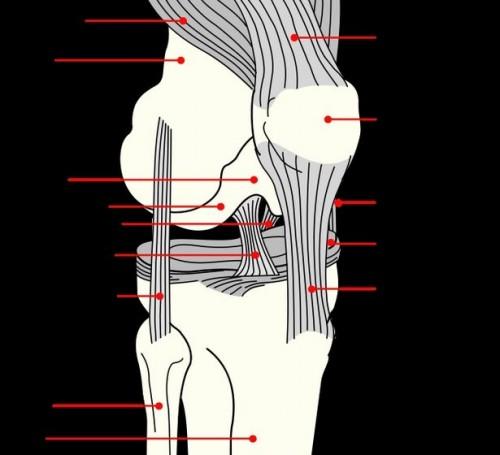 Erbe naturali per dolore alle ginocchia