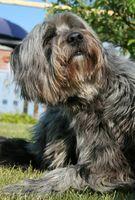 Zolfo 6X per i problemi della pelle del cane
