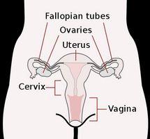Può Cancro del collo dell'utero essere curata?