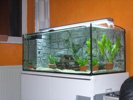 Come prepararsi vetro per sigillare un acquario