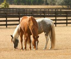 Equine Massage Casa programmi di studio e certificazione