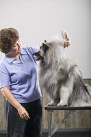 Quali sono le cause di diradamento dei capelli nei cani?
