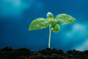 Effetti collaterali di steroli vegetali