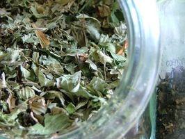 Gli effetti di estratto di tè verde