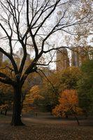 Come fare domanda per un pass di accesso per Parchi Stato di New York