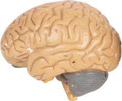 Come controllare l'ipertensione nei pazienti trauma cranico
