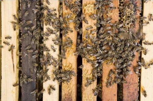 Come prevenire punture di api
