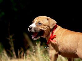 Bromuro di potassio e debolezza muscolare in cani