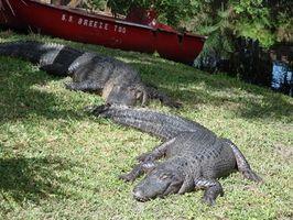 Alberghi a Spring Creek, Florida