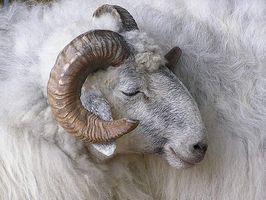 Che cosa è una lana allergia?