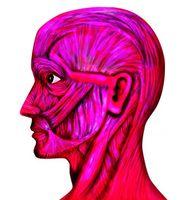 Esercizi riformazione professionale viso