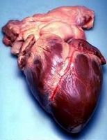 Effetti collaterali di Palpitazioni cardiache