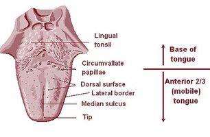 Tongue Diagnosi di cancro