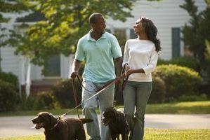 Come ottenere il vostro padrone di casa per farvi avere un cane