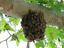 Benefici per la salute di Bee Propolis Liquid
