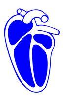 Quali sono le quattro proprietà del tessuto cardiaco?
