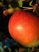 Proprietà di aceto di mele