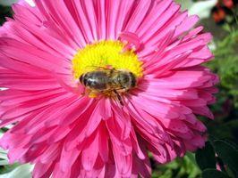 Bee Pollen Supplemento informazioni
