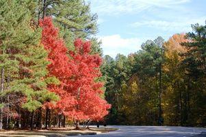 North Carolina federale o statale Campeggi