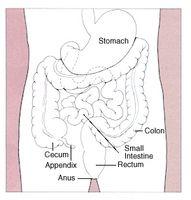 Segni e sintomi di cancro al colon negli uomini