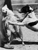 Suggerimenti utili per mantenere il vostro cane da ringhiare persone