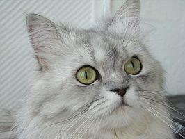 Tag pelle a Gatti