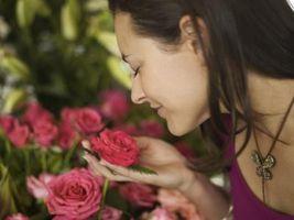 Valore medicinale di Rose Piante