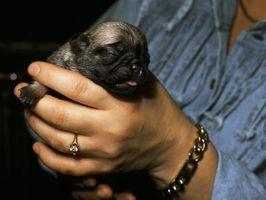 Come dire Male & Female cani Apart alla nascita