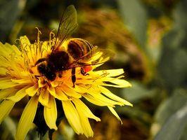 Quali sono i trattamenti per un Insect Bite allergia?