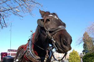 Terapia Equine per Addiction