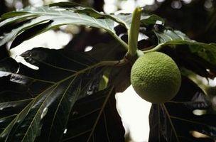 Piante e animali Medicinali dalla foresta pluviale