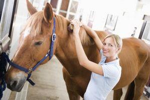 Urti pelle e Hives su Cavalli