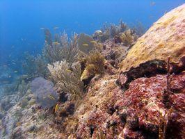 Red Alghe Marine per infezioni virali