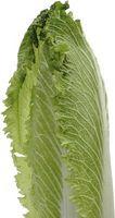 Come Juice Bibb & Cos Lettuce