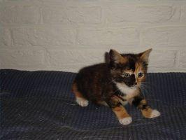 Che cosa si può dare un gatto per prurito?