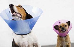 Modi per guarire un taglio su un cane